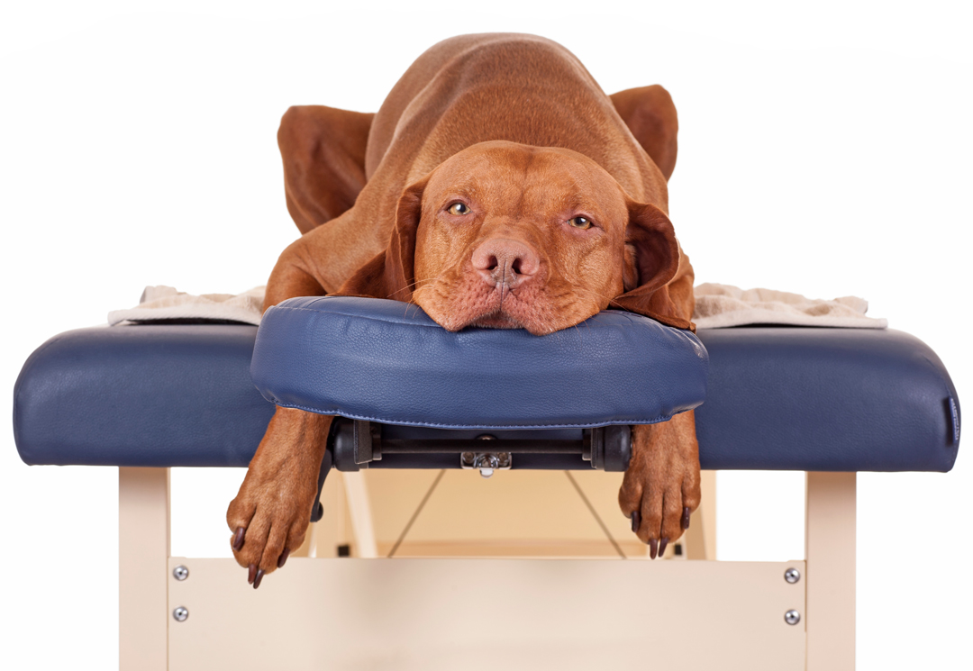 Benefits of Canine Therapeutic Massage